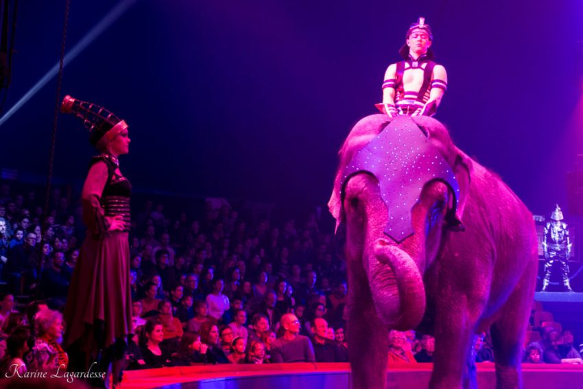 Cirque Arlette Gruss - Blog Made me happy - bordeaux-19