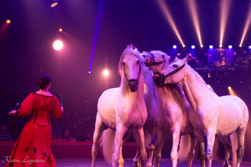Cirque Arlette Gruss - Blog Made me happy - bordeaux-28