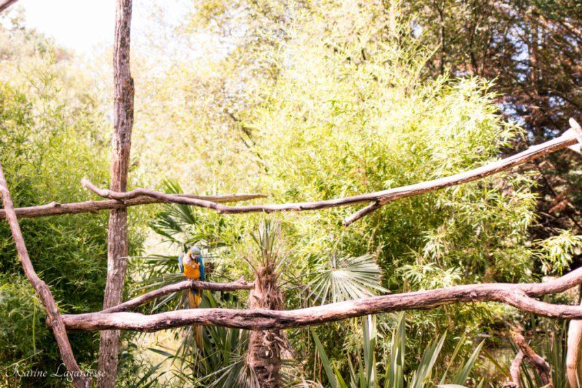 Zoo Bassin d'Arcachon 2016-1