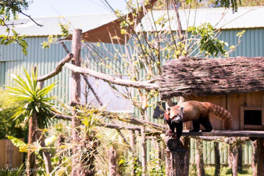 Zoo Bassin d'Arcachon 2016-31