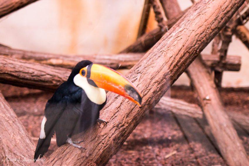 Zoo Bassin d'Arcachon 2016-9