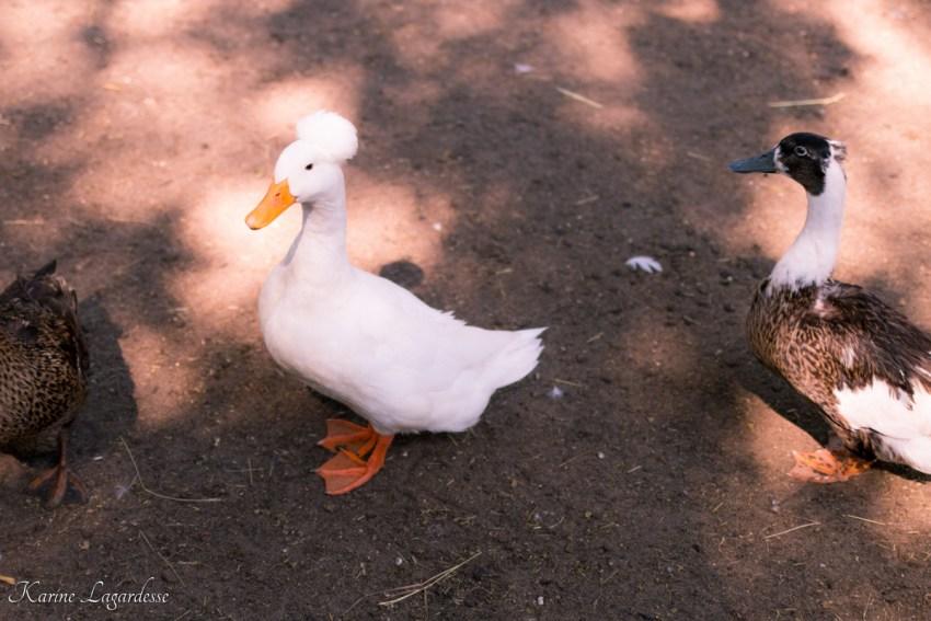 parc-coccinelle-gujan-mestras-made-me-happy-blog-3