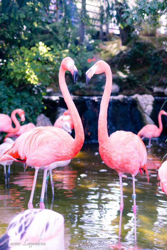 zoo-palmyre-made-me-happy-blog-bordeaux-20