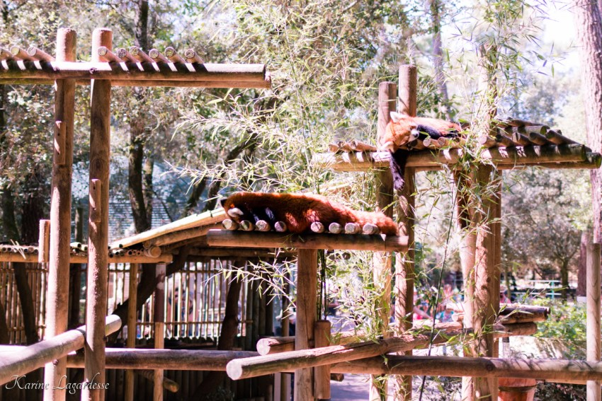 zoo-palmyre-made-me-happy-blog-bordeaux-31