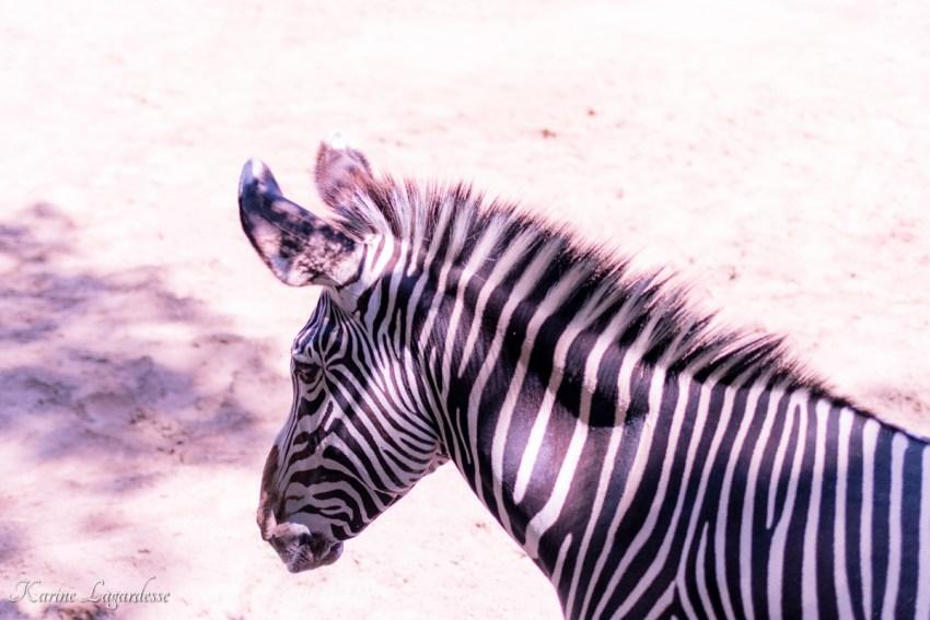 zoo-palmyre-made-me-happy-blog-bordeaux-33
