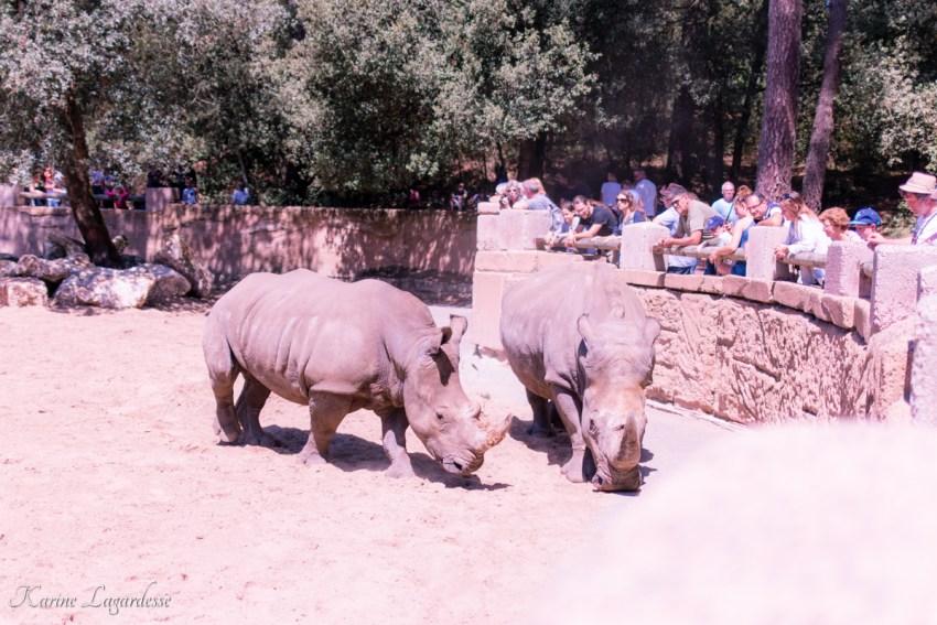 zoo-palmyre-made-me-happy-blog-bordeaux-36