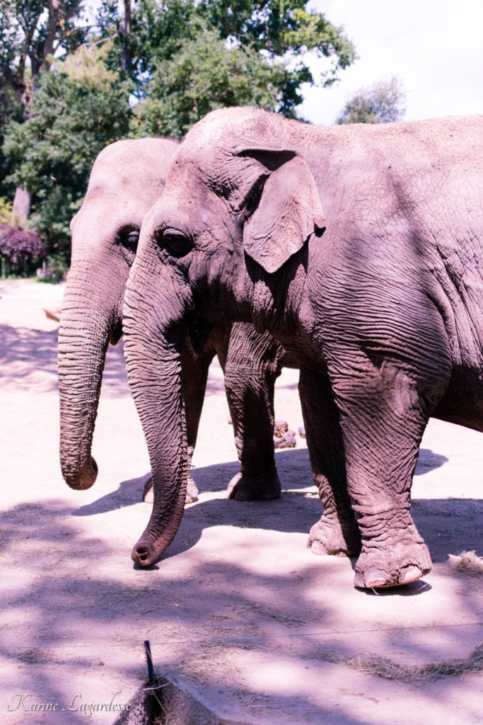 zoo-palmyre-made-me-happy-blog-bordeaux-44