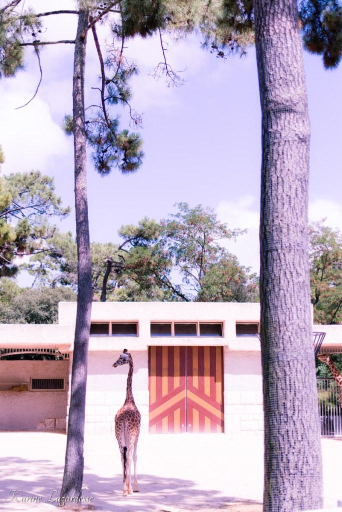 zoo-palmyre-made-me-happy-blog-bordeaux-64