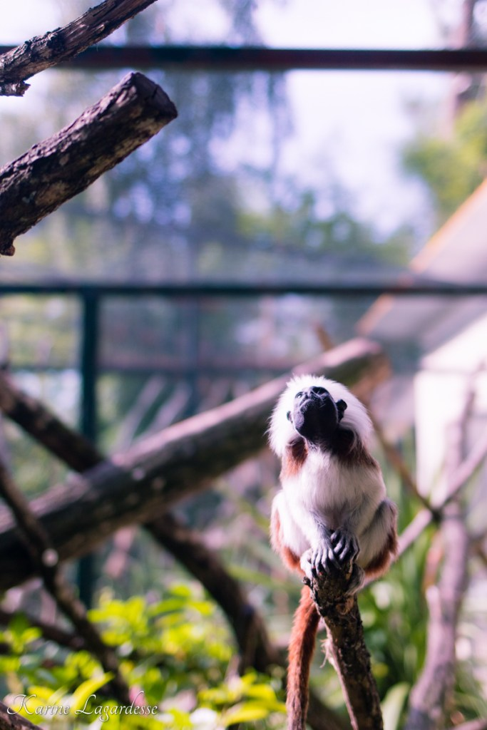 Zoo du Bassin d'Arcachon - Blog Made me happy