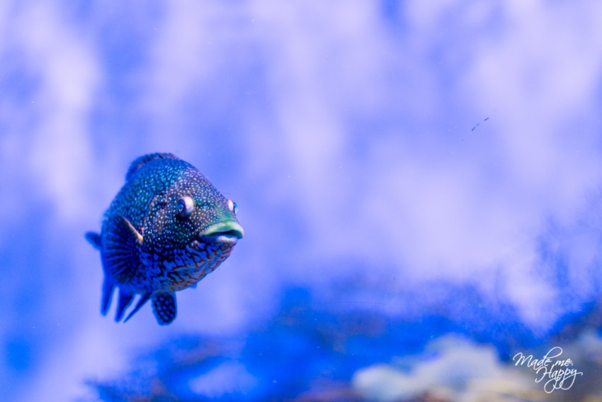 Aquarium La Rochelle - Blog lifestyle Bordeaux-1