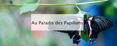 Au Paradis des papillons Sanguinet - Blog lifestyle Bordeaux