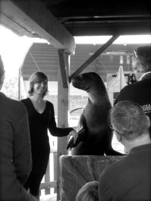 Photo de la Rencontre avec une Otarie Marineland