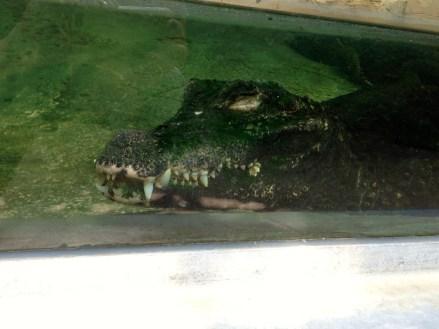 ferme aux crocodiles 02