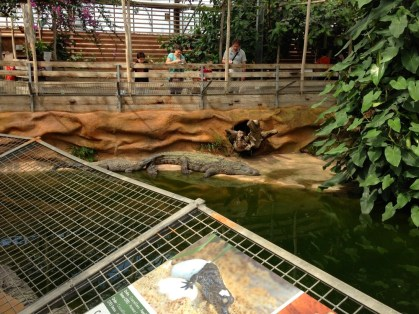 ferme aux crocodiles 08