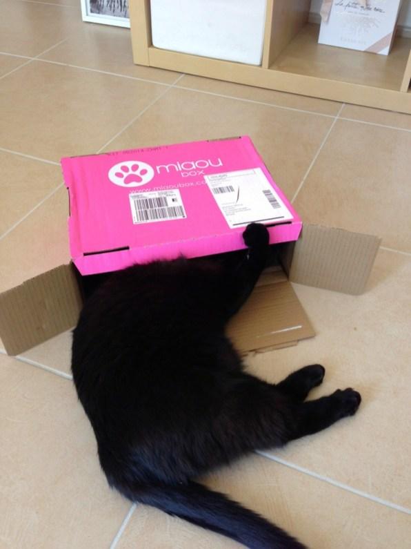 Miaou Box mai 2014
