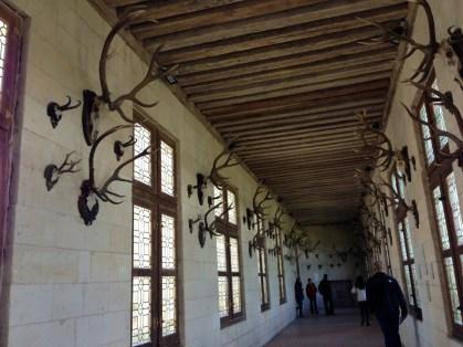 Trophées de chasse Chambord