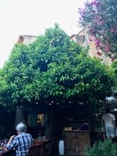 Le Jardin Bormes - 3