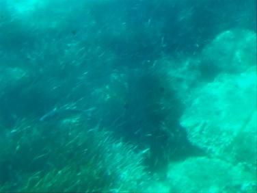 Seascope Lavandou - 5