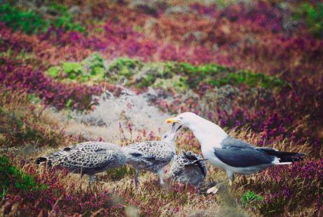 Isole bretoni: ÎLE DE GROIX