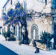 Provenza e Costa Azzurra: Saint-Rèmy