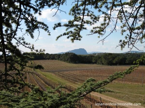 Domaine-Saint-Jean-de-l'Arbousier-cabanes