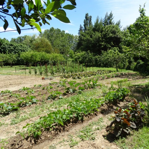 jardin-potager-bio-blog-vie-au-naturel