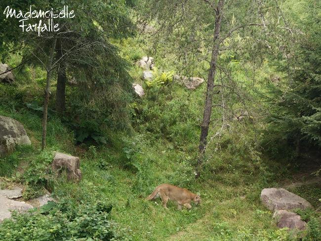 zoo sauvage de saint-félicien