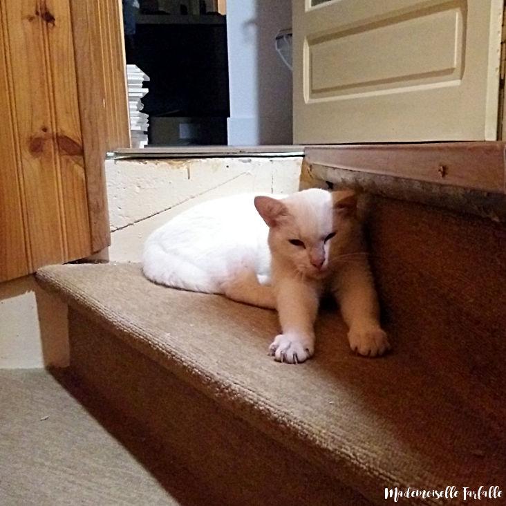 chat pendant les travaux