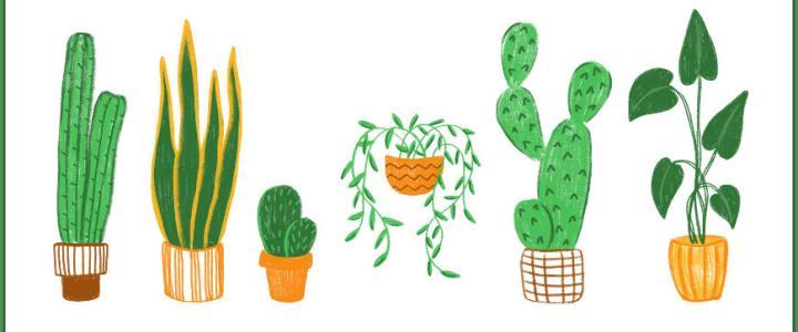 idées cadeaux amateurs de plantes