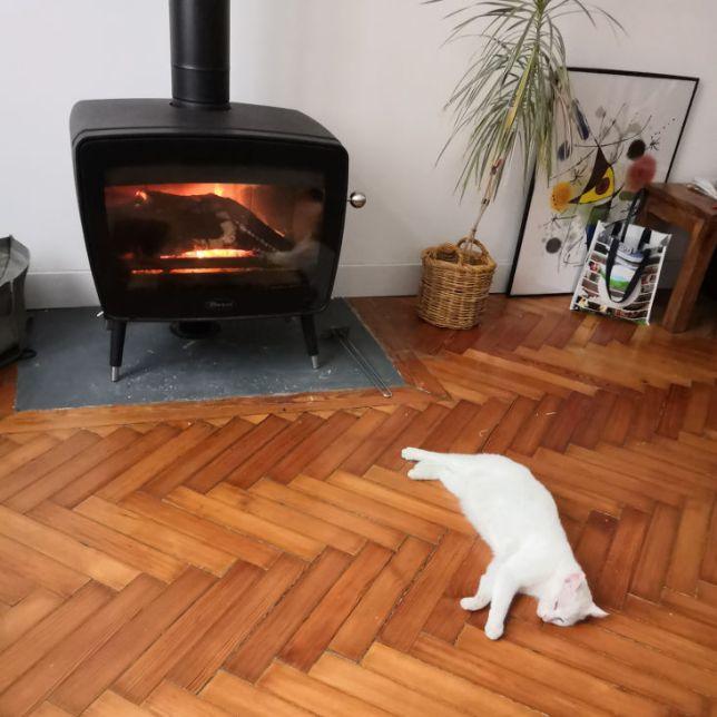 chat et poêle à bois
