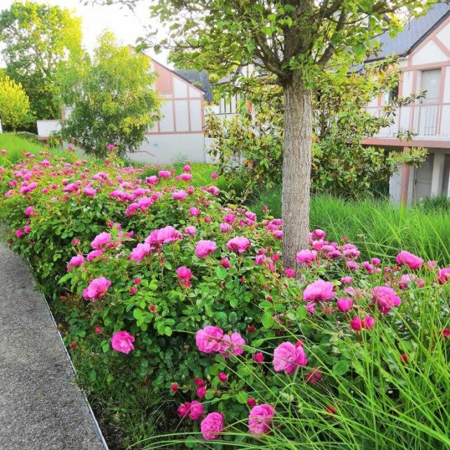 Pierre et Vacances Normandy Garden