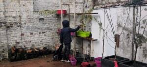 jardinage d'hiver