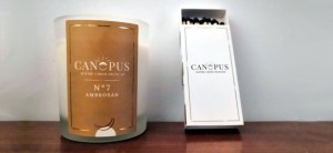 Canopus bougies