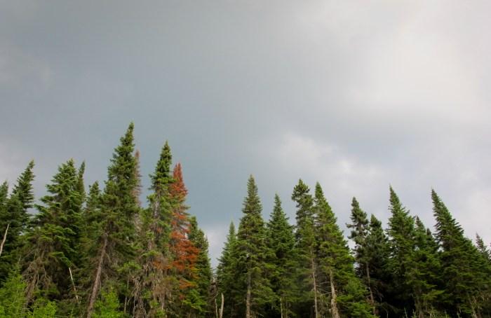 Saguenay-juillet-2014-47