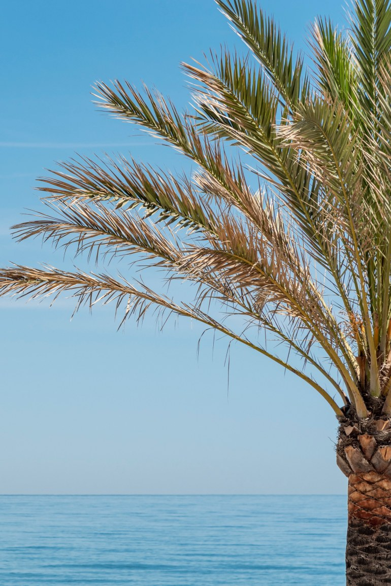 Part of palm tree set against the sea