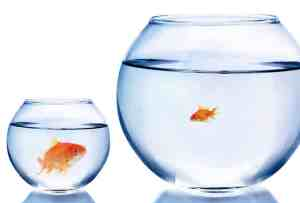Small Large Comparison Fish Too Small Goldfish Fishbowl. Envy can drive poor KPI choices