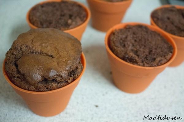 Kakaomuffins02