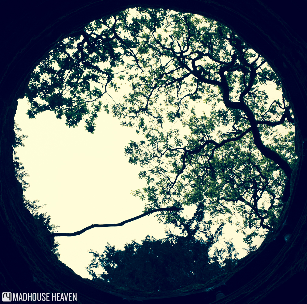 The view of the sky from the bottom of the Initiation Well, with silhouettes of tree branches