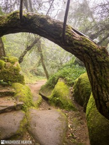 Over hanging tree branch, fairytale forest, Convent of the Capuchos, Sintra, Portugal