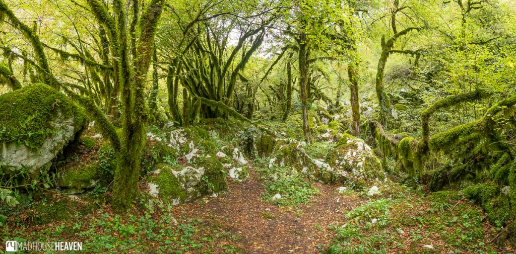Twisted trees covered in green moss around a fairy grove opening up to the gate of wishes in Mrtvica Canyon, Montenegro