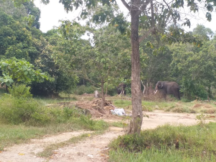 Elephant park, nirwana gardens bangalore