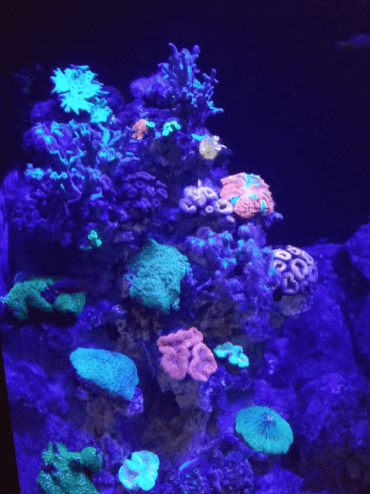 8.Coral at Sea Aquarium