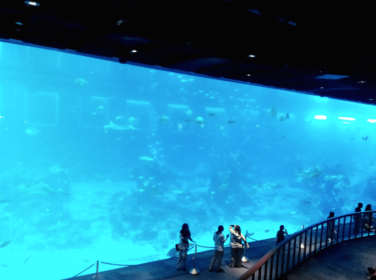 8.Sea Aquarium- gaint open sea habitat
