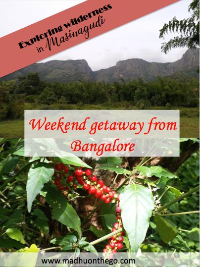 Exploring the wilderness in Masinagudi, weekend getaway from Bangalore.png