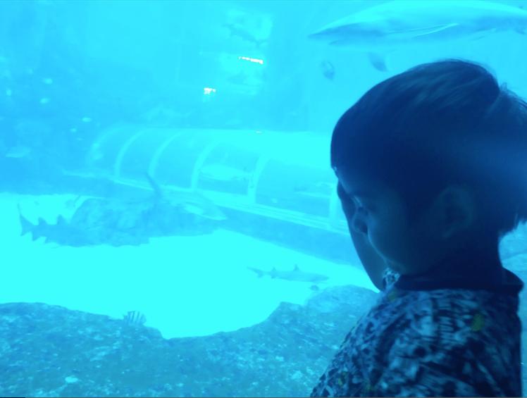 fascinated at Sea Aquarium .png