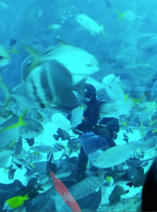 fish feeding at Open Habitat.png