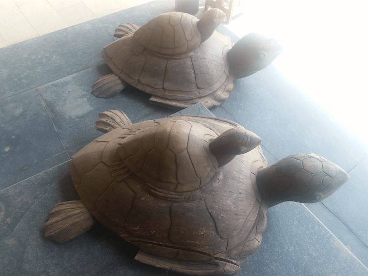 turtles, Goa.png