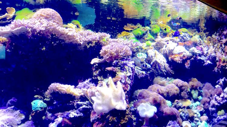Aquarium, Oceans park .png