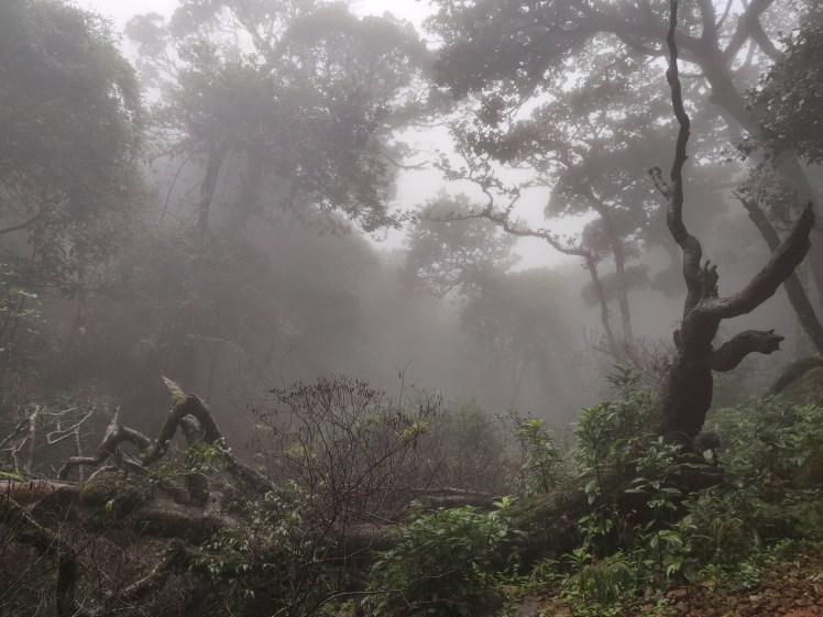 9. Misty morning, Kumara parvatha.jpg
