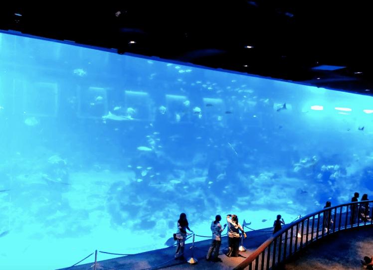 S..E.A Aquarium, Sentosa Island